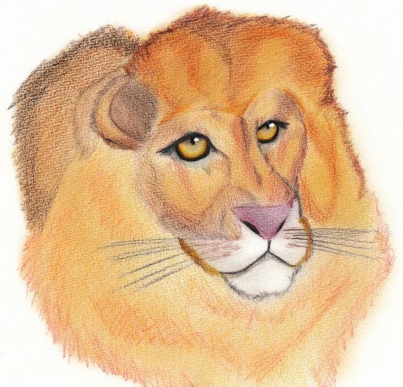 ライオン 今日ものんびりと 2016/05/27