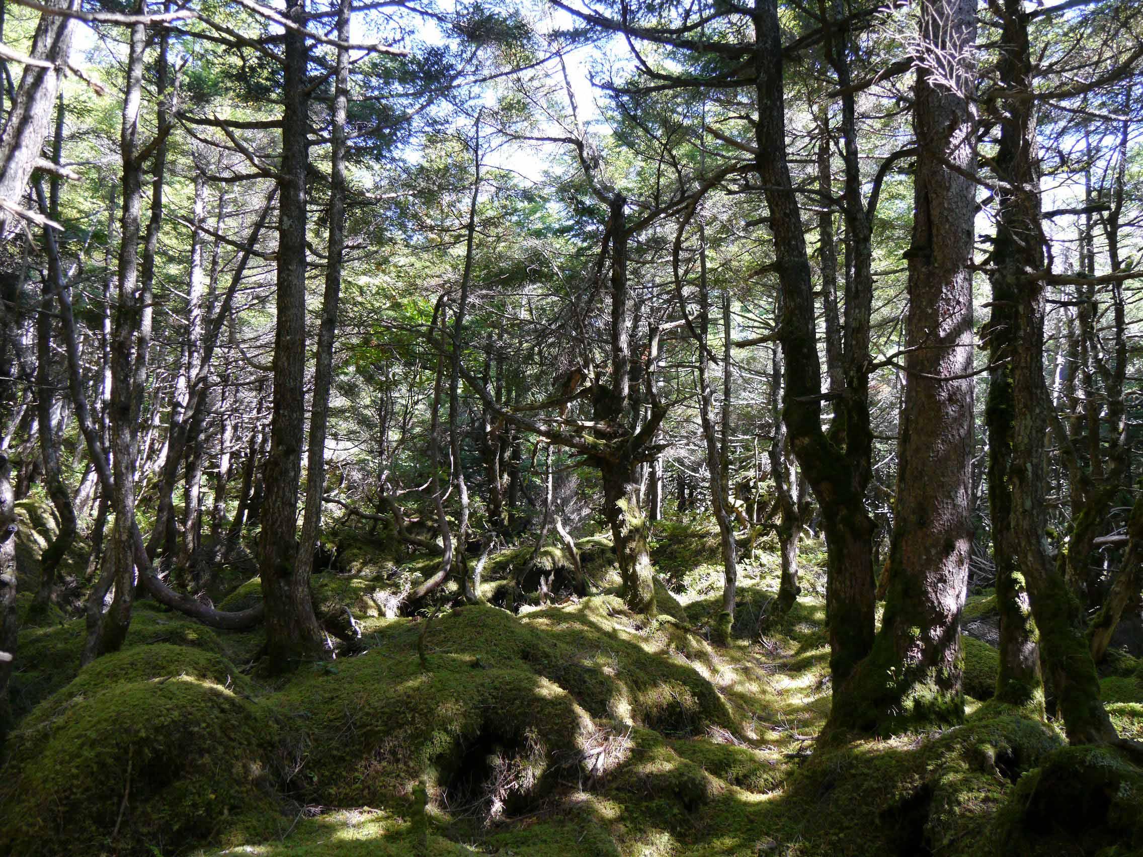 白駒の森_160930