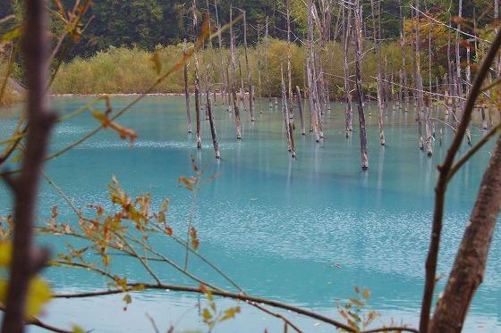 160928美瑛の青い池-1