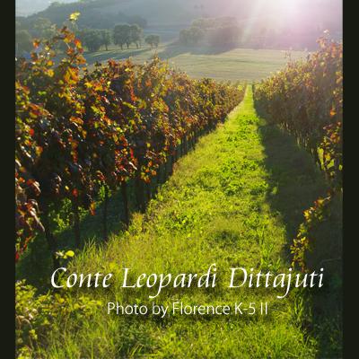 イタリア Conte Leopardi Dittajuti 140901
