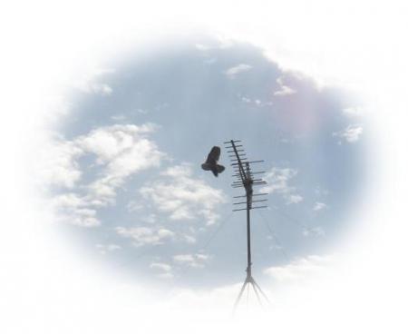 鳩蛾 009