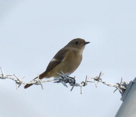 大川の紋付鳥 067