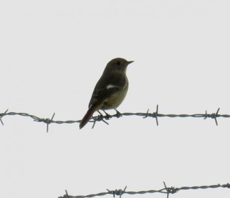 大川の紋付鳥 063