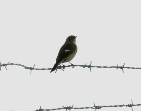 大川の紋付鳥 060
