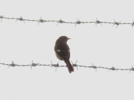 大川の紋付鳥 059