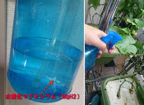水素化マグネシウム水溶液の葉面散布