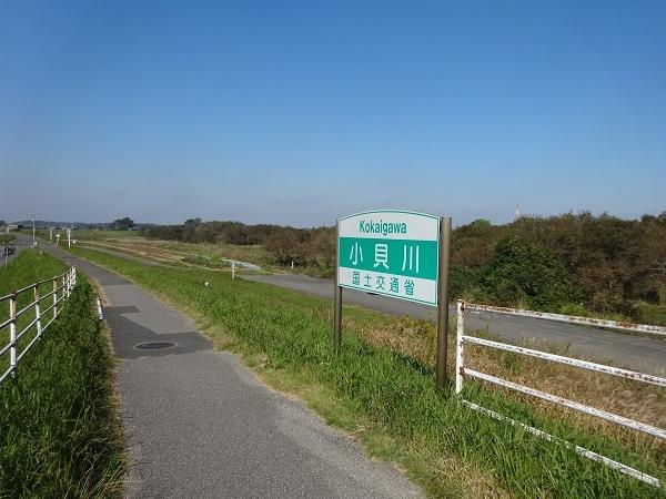 20161103福岡堰 (1)