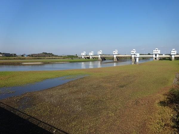 20161103福岡堰 (4)