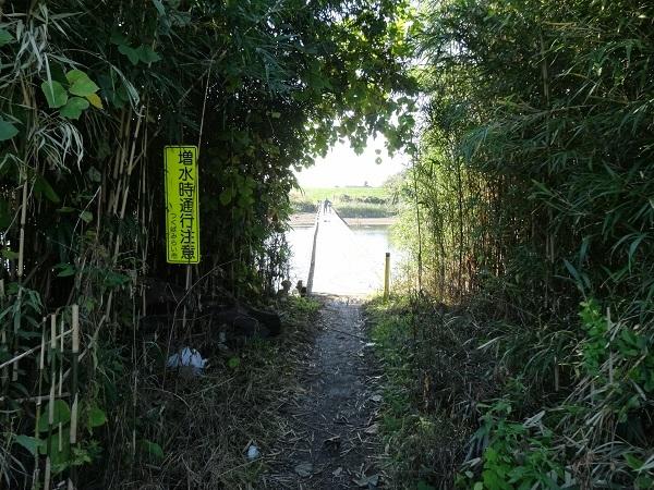 20161103福岡堰 (8)