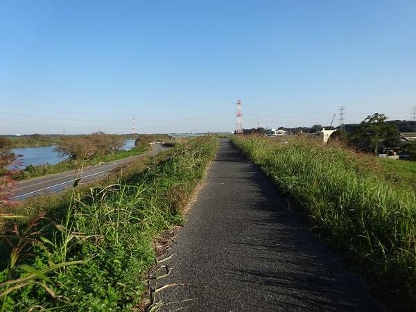 20161103福岡堰 (17)