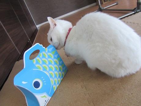 鯉のぼりのお菓子とふきちゃん3