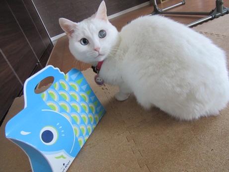 鯉のぼりのお菓子とふきちゃん4