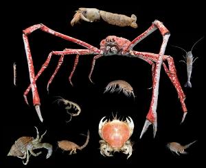 800px-Crustacea.jpg