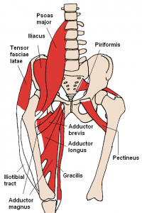 Anterior_Hip_Muscles_2_20161009075053eec.png