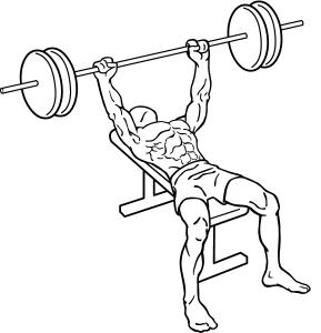 Bench-press-1.png