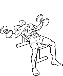 Dumbbell-flys-2.png