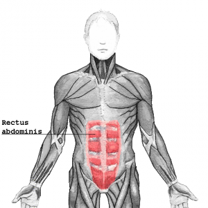 Rectus_abdominiss_20161016112711b11.png