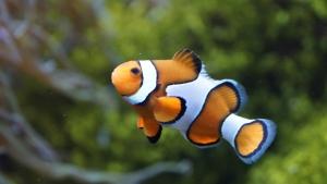 clownfish-426567_960_720_2016090719154314e.jpg