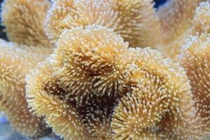 coral-1318694_960_720.jpg