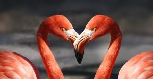 flamingo-600205_960_720.jpg