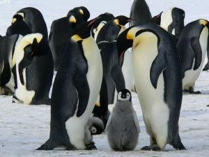 penguins-429128_960_720_20160908201358acd.jpg