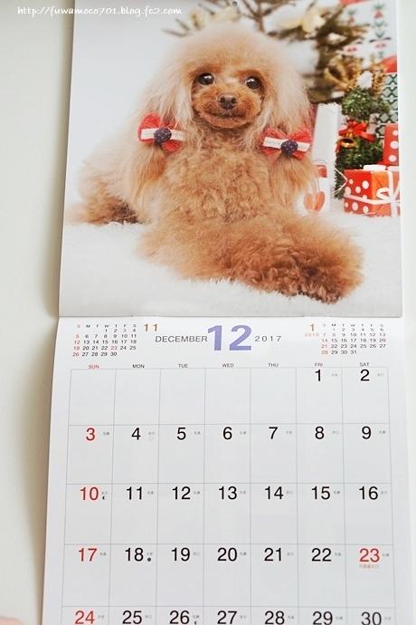 チビプードルモコの毎日☆モコみるくカレンダーC☆
