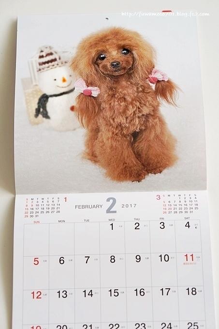 チビプードルモコの毎日☆モコみるくカレンダーB☆