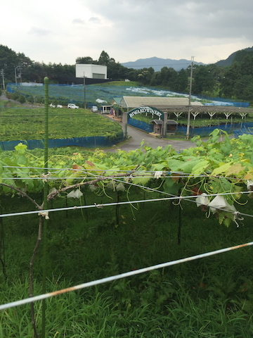Biwako Winery