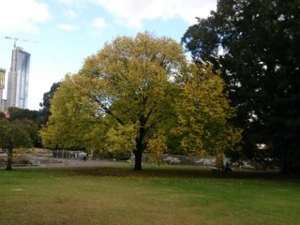 近くの大きな公園の木