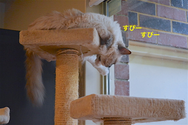 sleepingcat1.jpg