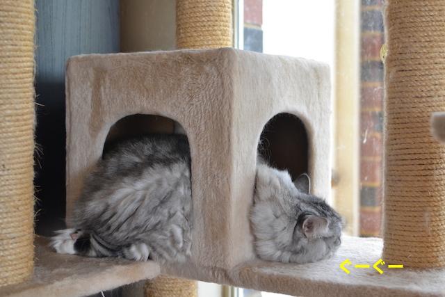 sleepingcat2.jpg