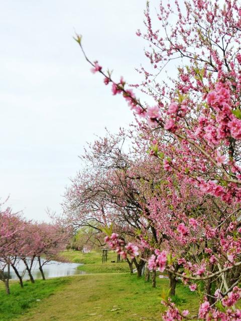040 古河総合公園