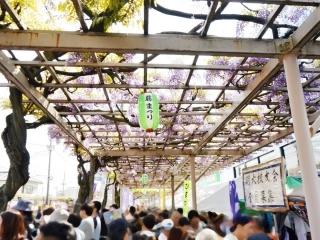 春日部藤まつり (2)