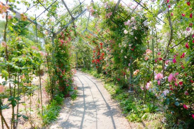平成の森公園 (1)