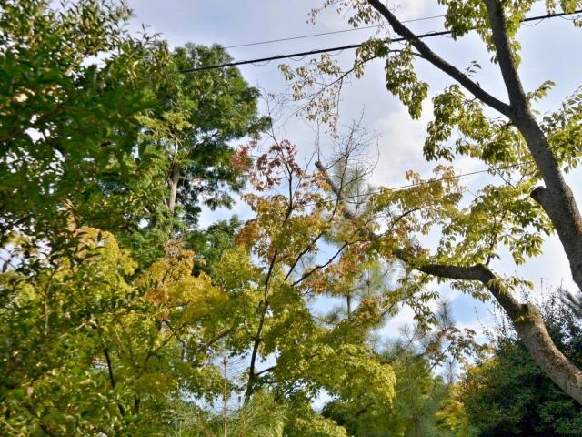 竹林の小径 (3)