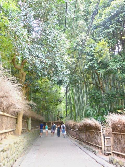 竹林の小径 (7)