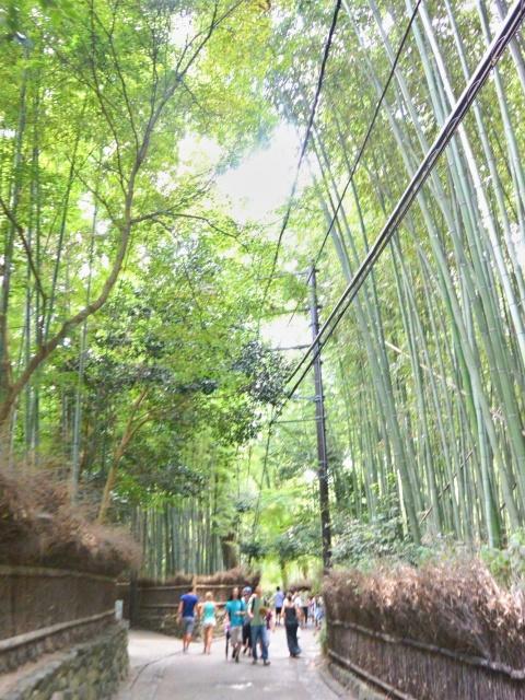 竹林の小径 (8)
