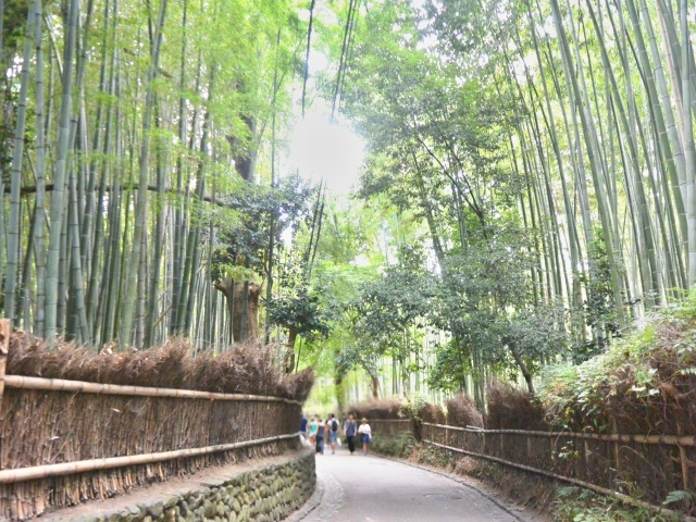 竹林の小径 (9)