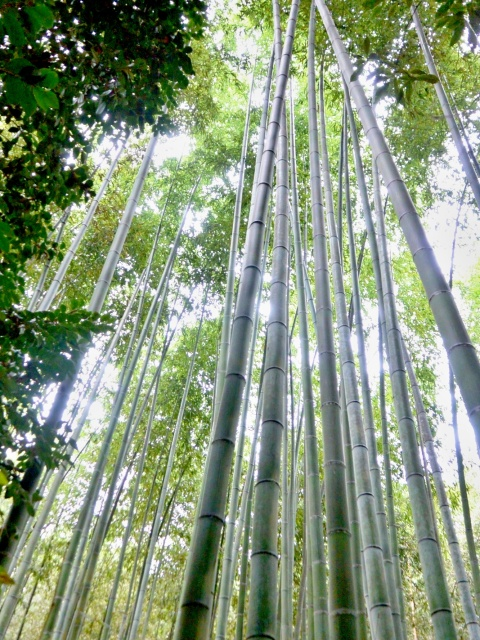 竹林の小径 (10)