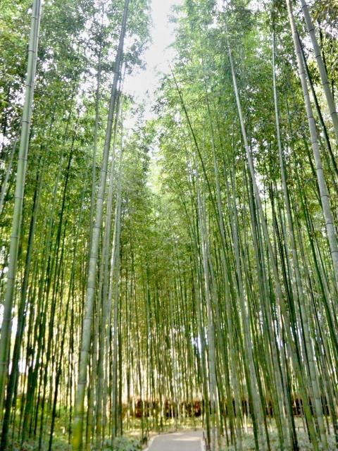 竹林の小径 (11)