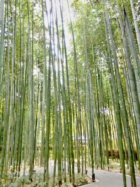 竹林の小径 (13)