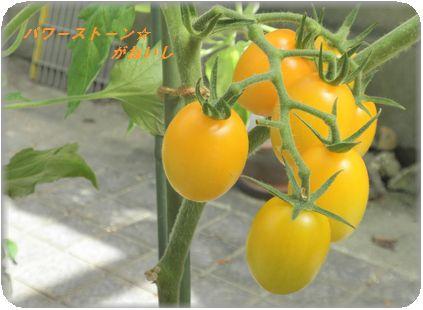 半熟トマト