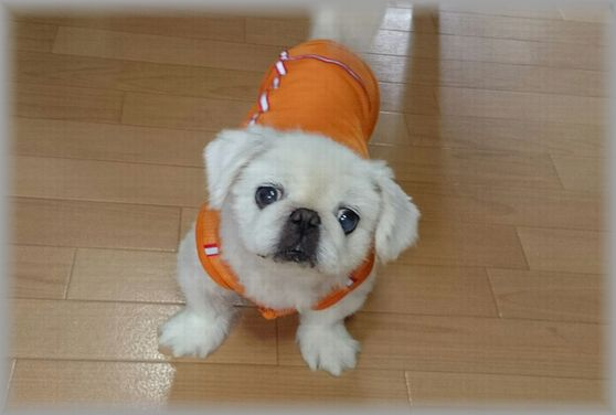 オレンジ服のノリコさん