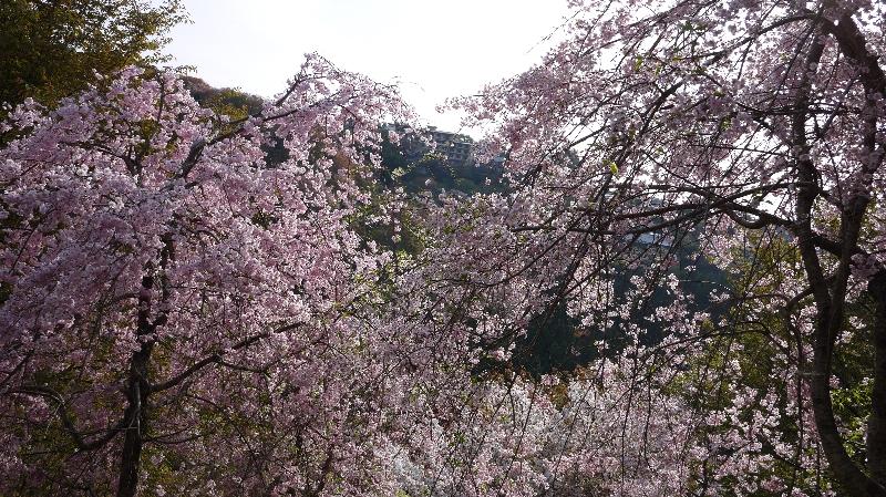 20160412奈良12