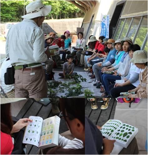 木育交流植物・調べる