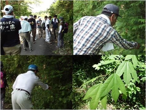 JT・森林散策