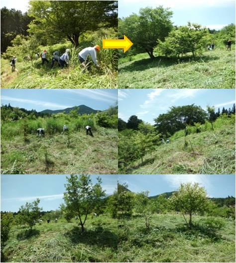 JT・草刈り2