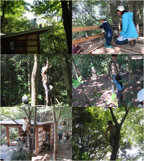 飛騨市木育・木登り