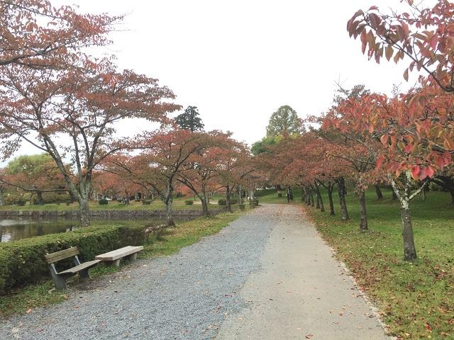 鶴岡公園紅葉2016 3