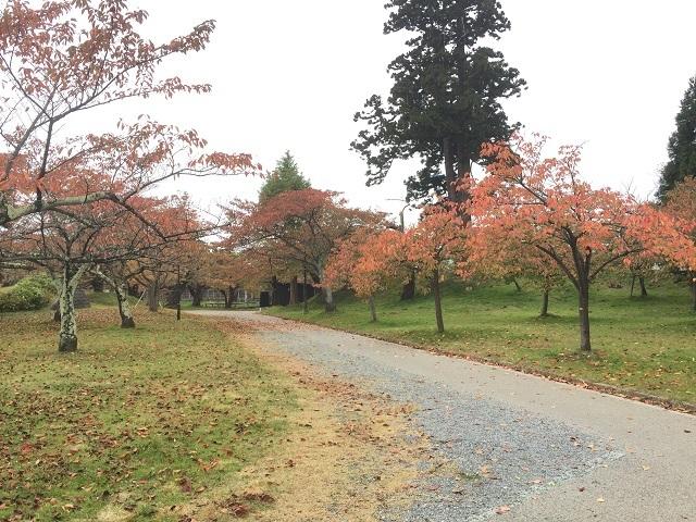 鶴岡公園紅葉2016 4